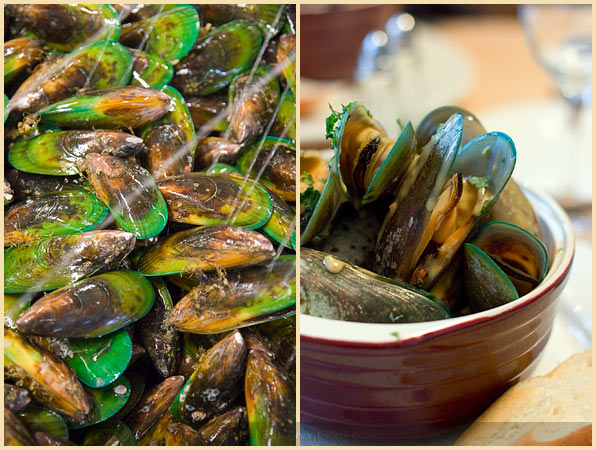 new zealand greenlip mussels