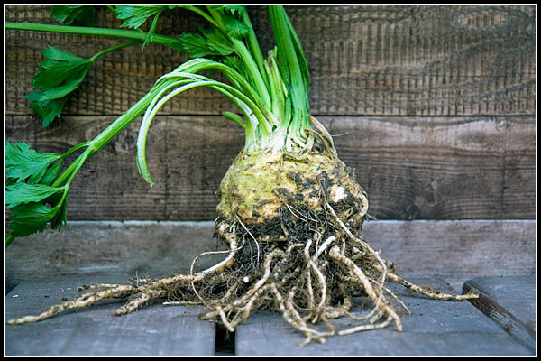 celeriac boston globe
